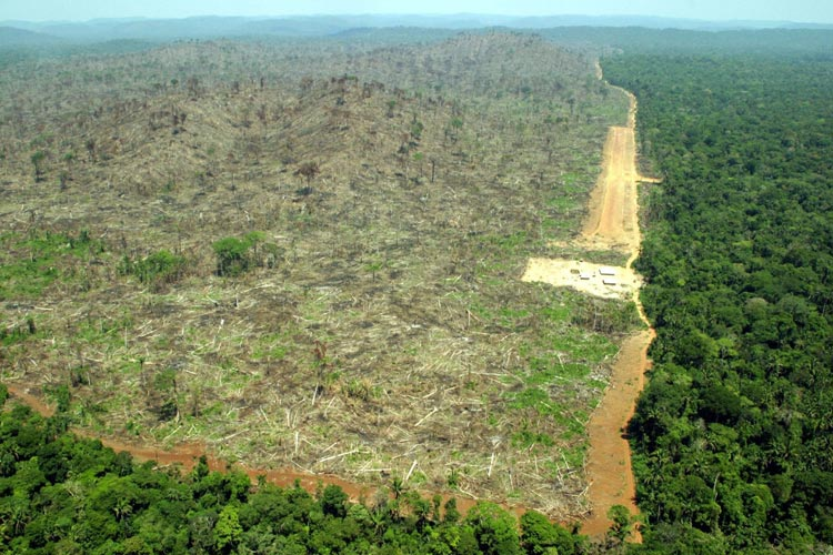 an introduction to the destruction of the rainforest and the effects on modern medicines Rainforest destruction and its effect on the world by introduction spices, industrial raw materials, and medicines that originate from the rainforest.