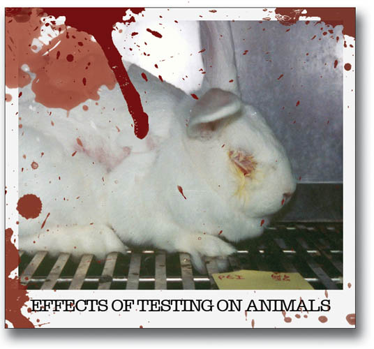 animal testing is bad Cosmetic animal cruelty: the good, the bad, and the ugly how cosmetic animal cruelty benefits us but harms animals by rebeccah zuazua the cruelty of animal testing.