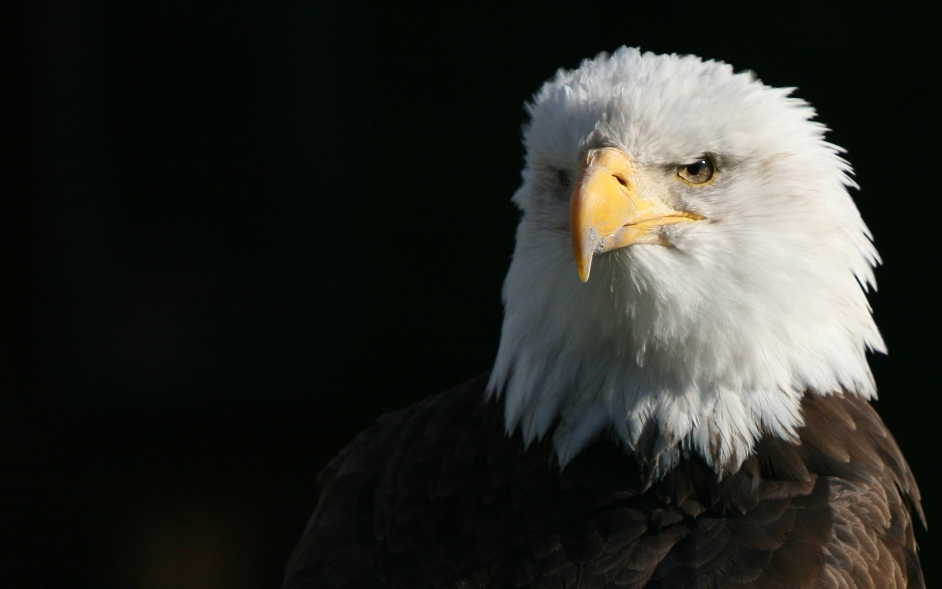 All About Eagles Birds Of Eden Free Flight Sanctuary